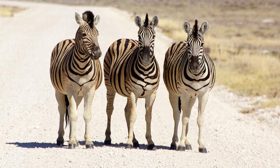 Namibia - Heribert Bechen
